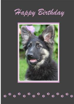 German Shepherd Birthday Cards 8 Pack